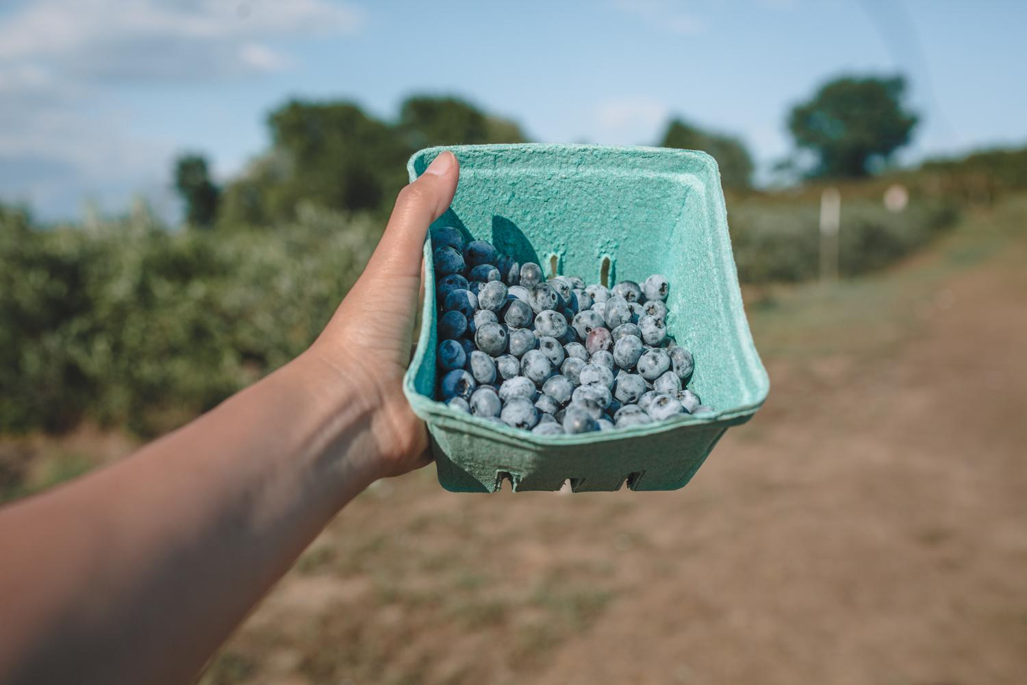 a carton of blue berries from the hudson valley